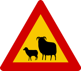 Traffic sign of Iceland: Warning for sheep on the road